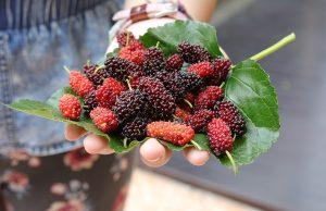 fruits-foliages-berries-kent-workshop