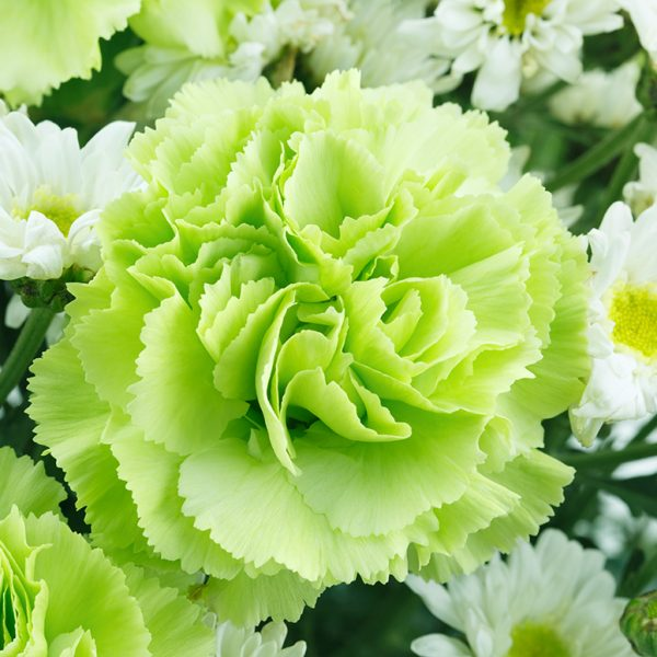 white-and-green